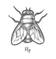fly insect sketch or bottle housefly drawing vector image vector image