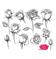 hand drawn botanical rose set Engraved vector image vector image