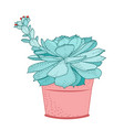 succulent plant in rustic pot isolated ornamental vector image vector image