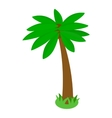 Tropical palm tree icon isometric 3d style vector image vector image