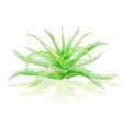 aloe bush vector image vector image
