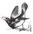 American Redstart vintage engraving vector image vector image