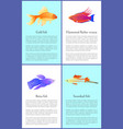 gold betta and swordtail fishes colorful banners vector image vector image
