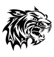 tiger head tattoo vintage engraving vector image vector image