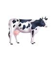 cow realistic vector image vector image