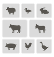 monochrome icons with domestic animals vector image vector image