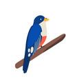 traditional cuban animal or tropical bird trogon