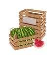 Wooden box full of watermelon isolated vector image vector image
