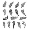 wings graphic vector image