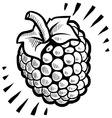 doodle raspberry vector image vector image