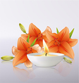 Lily flowers and candle vector image