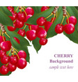 cherry fruits background growing branches vector image