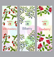 herbal tea collection wild strawberry bilberry vector image vector image