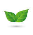Green leaf with water drop eco friendly concept vector image