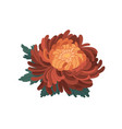 bud with gentle petals japanese orange vector image