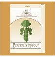 brussels sprout seed pack vector image vector image