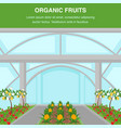organic fruits indoor cultivation poster template vector image vector image