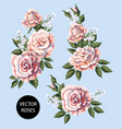 set of tea roses bouquet their buds vector image vector image