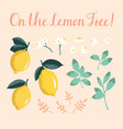 summer set with lemons and flowers isolated on vector image