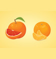 collection of fresh ripe oranges and vector image vector image