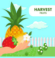 fruits summer harvest poster flat template vector image vector image