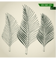set hand drawn palm leaves vector image