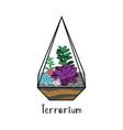 succulents in terrarium vector image vector image