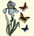 delicate iris with three air butterflies vector image