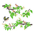 goldfinches on tree branches flat vector image vector image