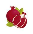 pomegranate juicy fresh fruit vector image vector image
