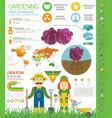 red cabbage beneficial features graphic template vector image vector image