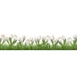 white tulips and grass vector image vector image