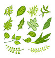 green bright leaf collection vector image