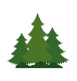 pines trees plants with grass vector image