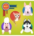 Set of different dog breeds vector image