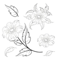 Flowers and leaves dahlia contours vector image vector image