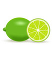 fresh lime isolated on vector image vector image