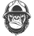 gorilla in the building helmet vector image vector image