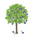 plum tree vector image vector image