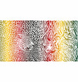 tiger and leopard and color pattern background vector image vector image