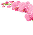 orchid phalaenopsis flower corner frame element vector image