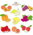 Set of mixed contour colorfull fruits Peach pear vector image