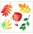 watercolor autumn leaves collection vector image vector image