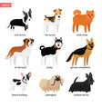 cartoon dogs icons set vector image