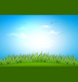 realistic green grass meadow background vector image