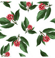 red holly christmas berries vector image