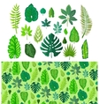 Set of Tropical Leaves Collection Green Leafs vector image