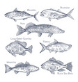 side view on ocean and sea fish sketch fishing vector image