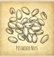 handful of pistachio nuts vector image vector image