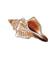 sea shell from a splash watercolor colored vector image vector image